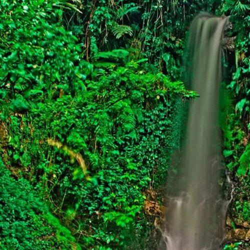 Hrd Latepost Nature Vintage Word Peace INDONESIA Bogorvidgram Bogor Love Gogreen