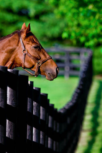 Horse By Fence On Field