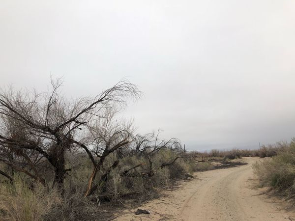 Cloudy Bare Tree Landscape Day Nature Tree Outdoors No People Beauty In Nature The Way Forward Scenics