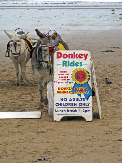 Animal Themes Animals Beach Day Donkeys England, UK Holidays No People Outdoors Placard Pleasure Beach Rides Sand Sand & Sea Scarbrough Seaside Seaside Town Sign