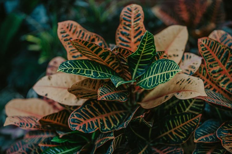 High angle view of multi colored leaves on plant