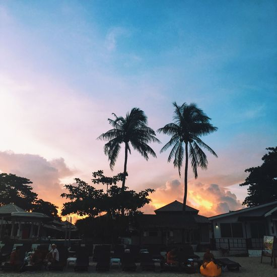 The Sweetest Sunset. Sunset Silhouette Palm Tree Nature Thailand Koh Samui