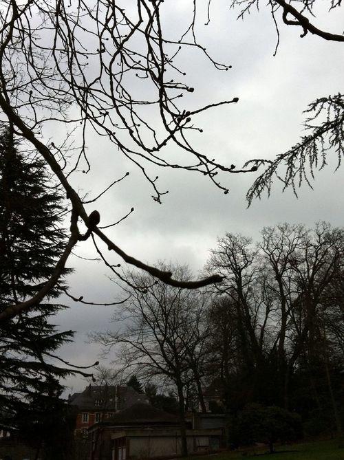 Treestatic