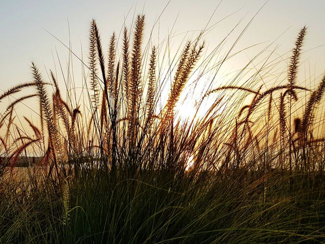 Sunrise Grass No People Nature Beauty In Nature Freshness Morning Light Travel Outdoors