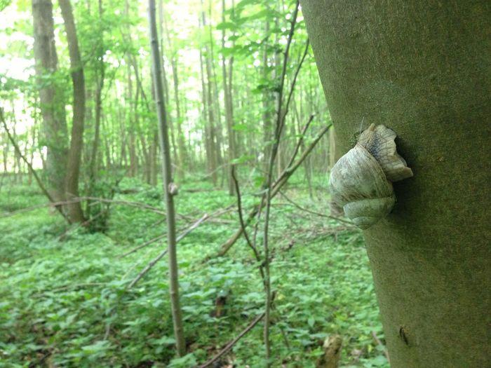 Prehistorical Visiting Nature