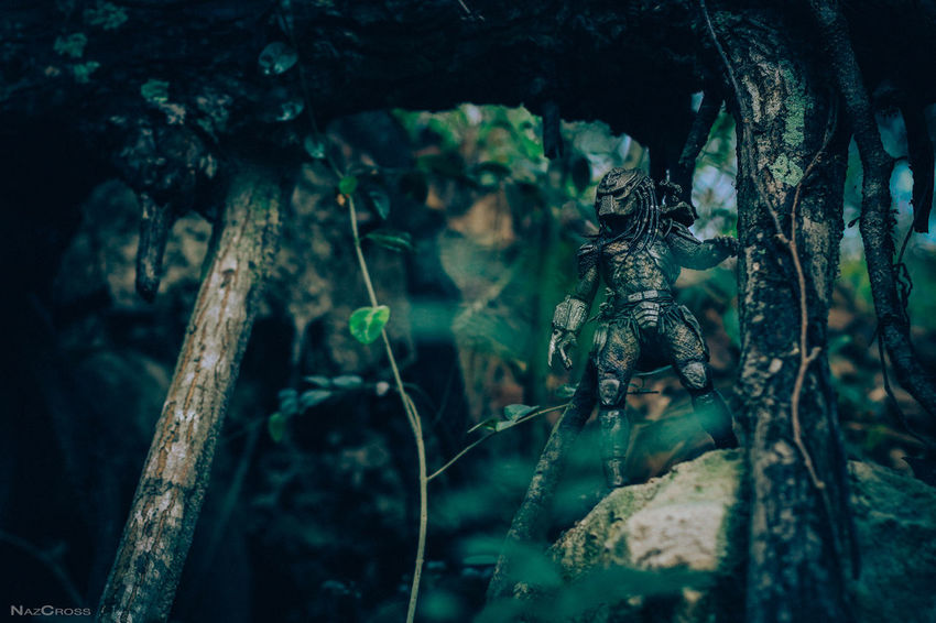 Sometimes you can't tell predator from prey... Actionfigurephotography Canon Color Photography Nature Photography Neca Necatoys Outdoor Photography Perspective Predator Toycommunity Toyphotography Yautja ZuluPredatorClan