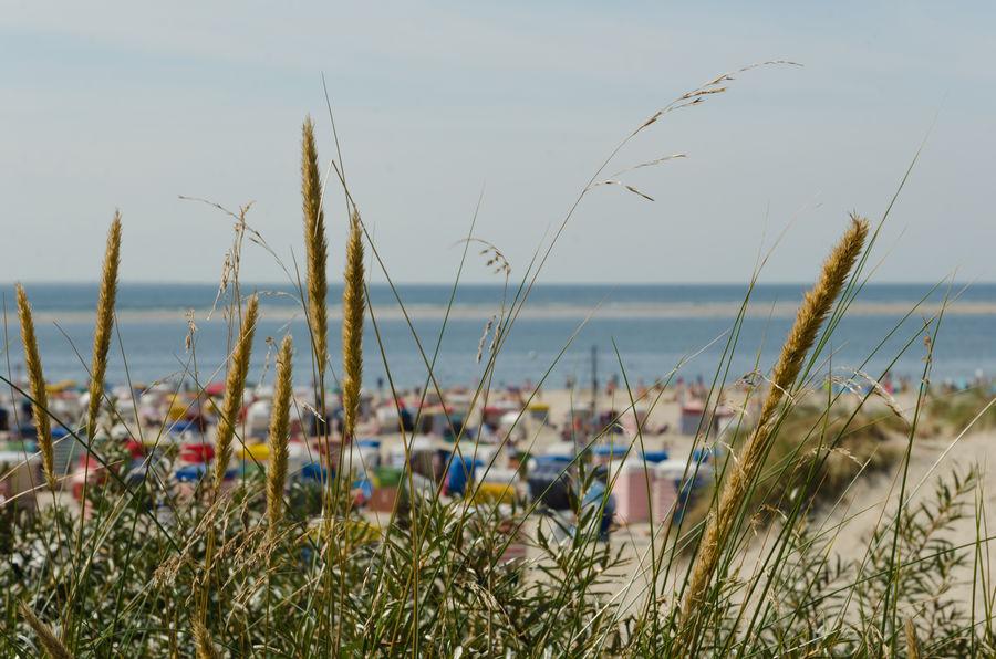 Holidays Insel Strand Strandkorb Urlaub Urlaub & Reisen Borkum Borkum, Germany Family Time Summer