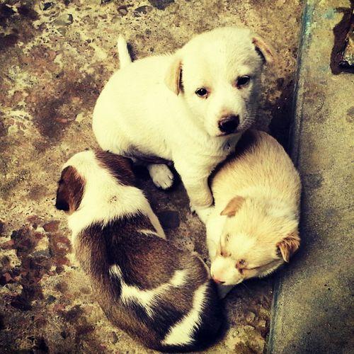 Cute Puppies Puppies Lovely Threemusketeers Straypuppy Yolo Likeforlike Follow4follow