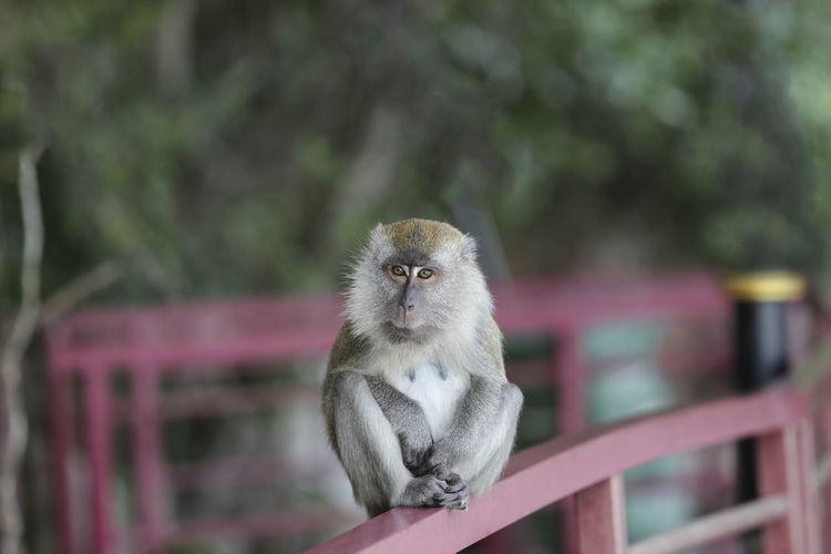 Portrait of monkey sitting on railing