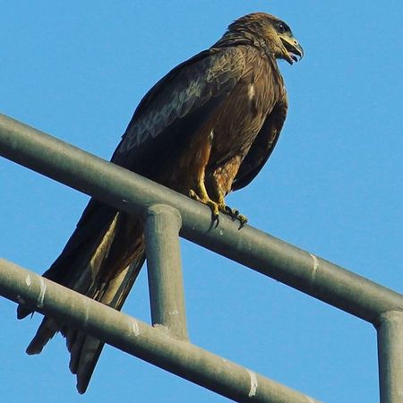 Eagle Dream Dream_click Dreamclick 1200D Canon Canonclub Canonphotography Canonindia Canon_india @andreapicoestrada