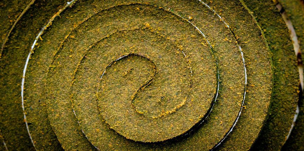 Moskito Mückenschutzspirale Mückenspiralle Bare Tree Circle Close-up Closeup Concentric Day No People Textured