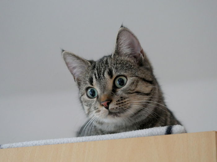 Close-up portrait of cat in box