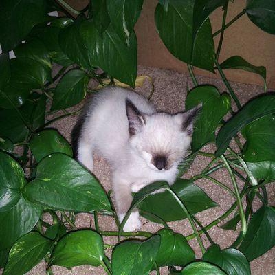 In the jungle, the mighty jungle Arya sleeps tonight.... Arya WhatDoWeSayToDeath NotToday GameOfThrones kittyporn thenobletruthfulone