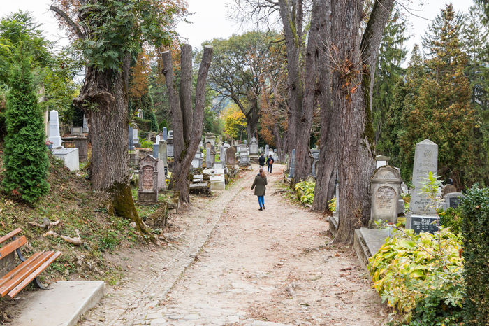 An old cemetery located in the castle in Old City. Sighisoara city in Romania Architecture Castle Cemetery Church City Place Sighisoara-Romania Tomb Transylvania Travel Building Colorful Crypt Design Europe Famous Place Fortress Historic Landmark Medieval Old Street Tourism Tower Urban