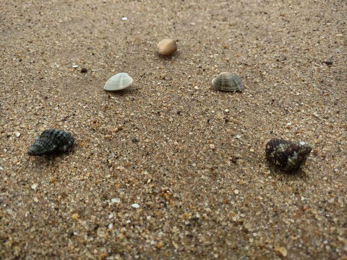 Shells On Sand, Shells In A Row Shells On Beach, Beach Beach Photography Hanging Out Fun Fun At Work Fun At The Beach ♡