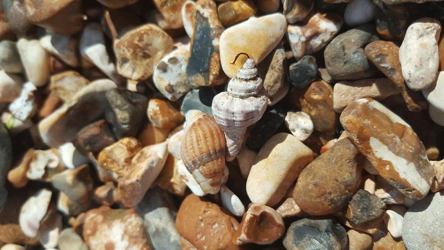 Shells Beach EyeEm Selects Full Frame Backgrounds Close-up Pebble Beach