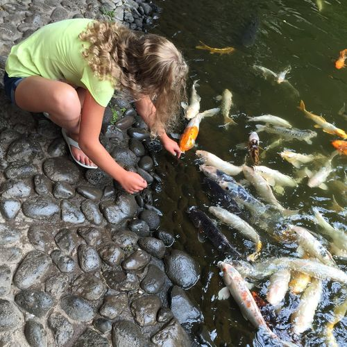 High Angle View Of Girl Playing With Koi Carp In Lake