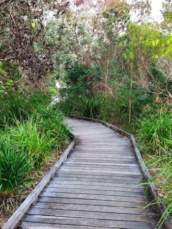 Exploring New Ground Taking Photos Pathway Path Where Are You Going? Finding New Frontiers