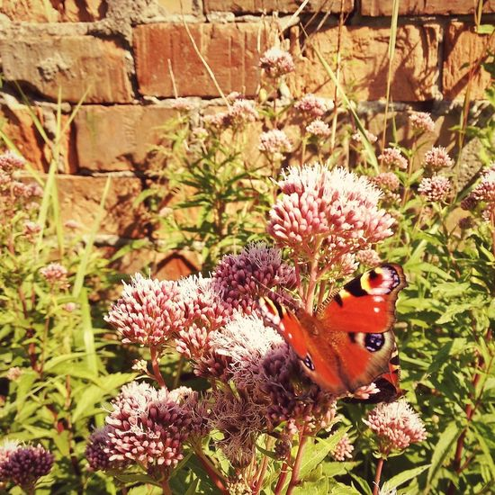 Nature Plant Outdoors Butterfly Ruin Stones