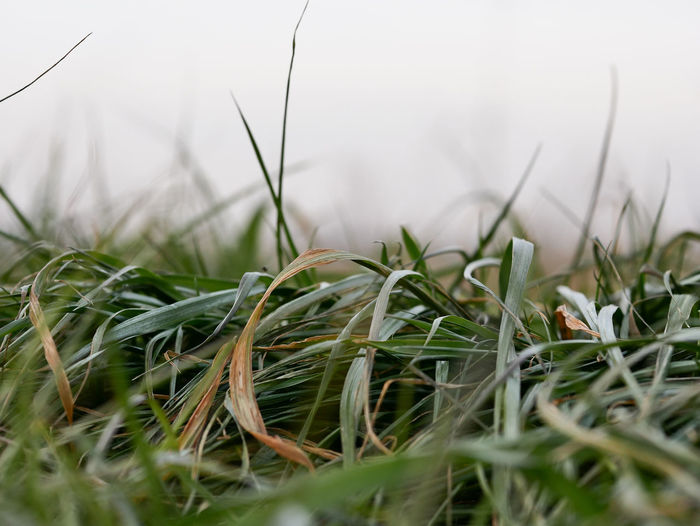 Plant Grass Growth Selective Focus Green Color Close-up Nature No People Land Field Day Beauty In Nature Tranquility Outdoors Blade Of Grass Agriculture Winter Cold Temperature Freshness