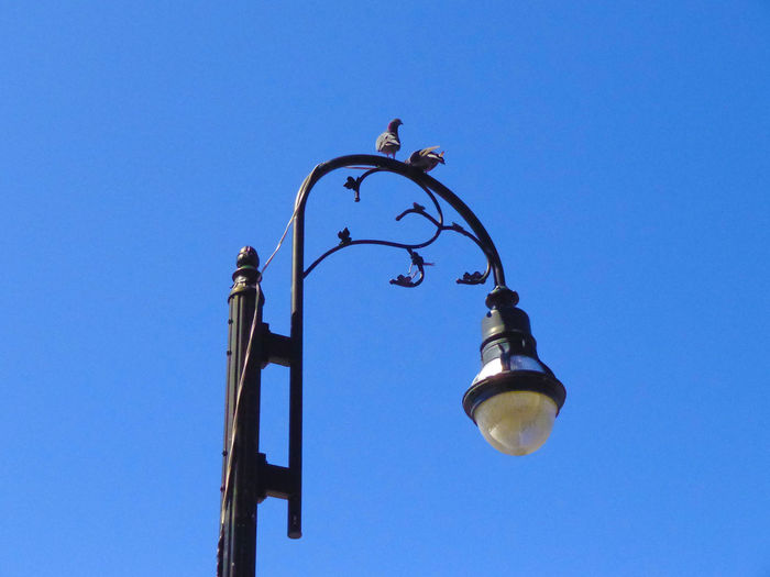 Low angle view of pigeons perching on lamp post against clear blue sky