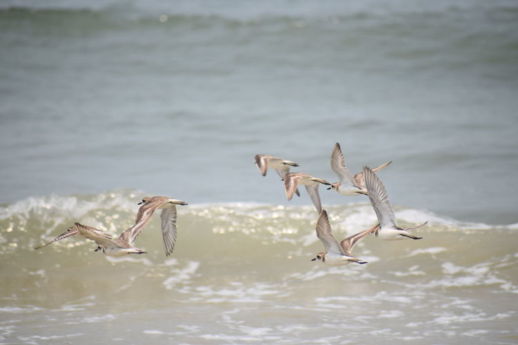 sea.........birds.....day NIKON D5300 Nikon Photography Nikon Nikond5300 Photography No People Nikonphotography Day Sea Life Sea Side Flying Spread Wings Animal Themes
