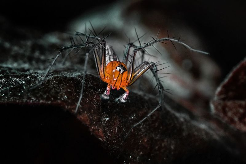 THE ASSASSIN Macro Macro Photography Macro_collection Macro Beauty Macro Nature Macroclique Close-up Insect Spider Jumping Spider Web
