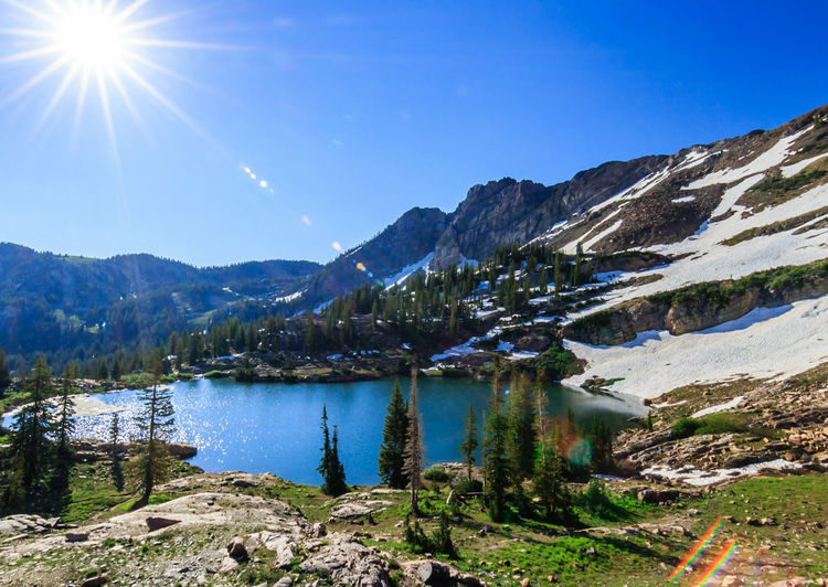 Utah Summer Alpine Travel Adventure Wanderlust Mountain Lake Pinaceae Landscape Nature Pine Tree Outdoors Scenics Wilderness No People Sky Forest Vacations Beauty In Nature Water Day Tree Clear Sky