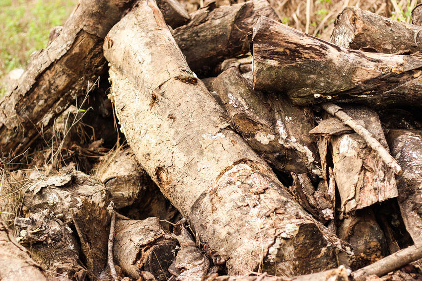 Wood - Material Tree Textured  Outdoors Day Wood Deforestation Environmental Problems Timber Tree Ring Lumber Industry Lumber
