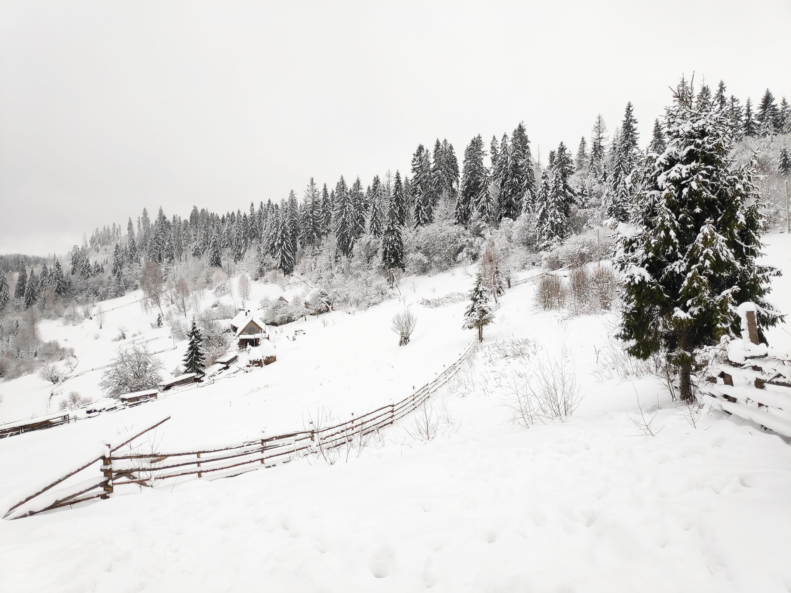 snow, winter, cold temperature, beauty in nature, scenics - nature, tree, plant, nature, tranquility, white color, sky, mountain, covering, tranquil scene, land, non-urban scene, environment, no people, landscape, pine tree, snowing