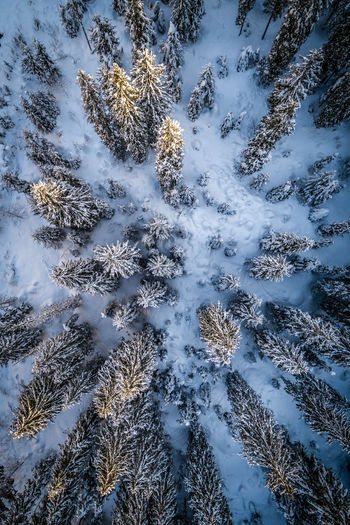Winter Wonderland Snow Trees Tree Cold Temperature Cold Winter Scenics Aerial View Full Frame Backgrounds No People Reflection Pattern Outdoors Day Sky Nature Shades Of Winter