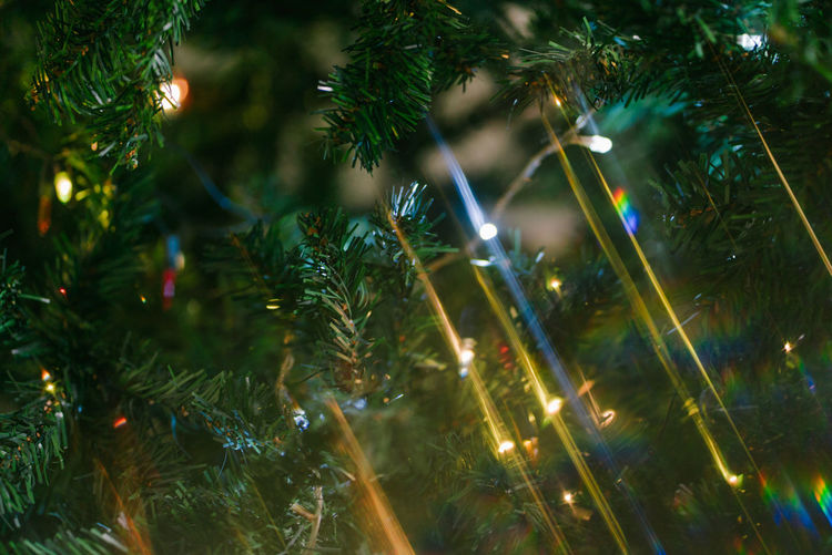 Christmas greetings Tree Christmas Decoration Plant Illuminated Celebration Christmas Decoration christmas tree Holiday Christmas Lights Green Color No People Nature Christmas Ornament Night Close-up Glowing Selective Focus Branch Pine Tree Fir Tree Coniferous Tree Needle - Plant Part