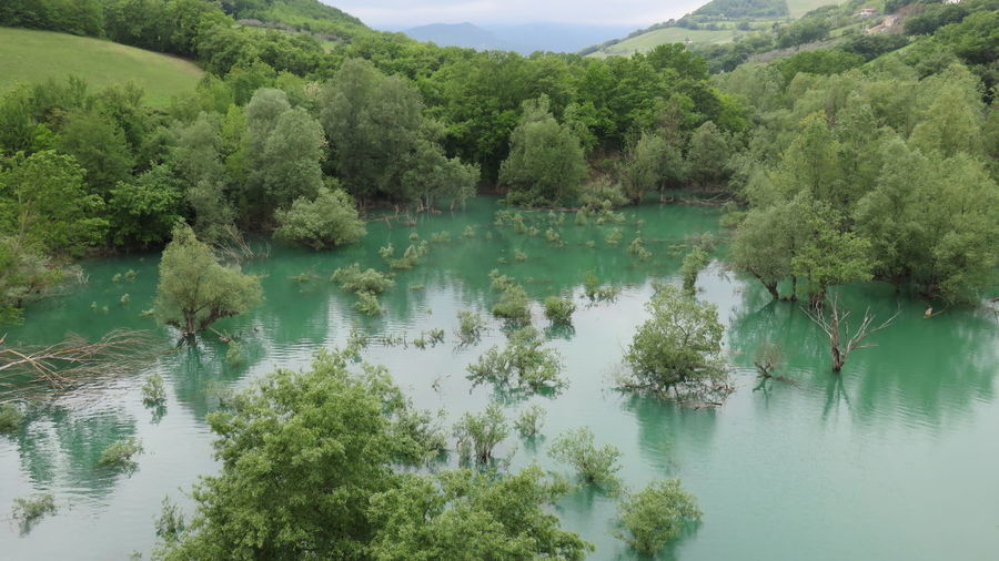 Calm lake against lush foliage