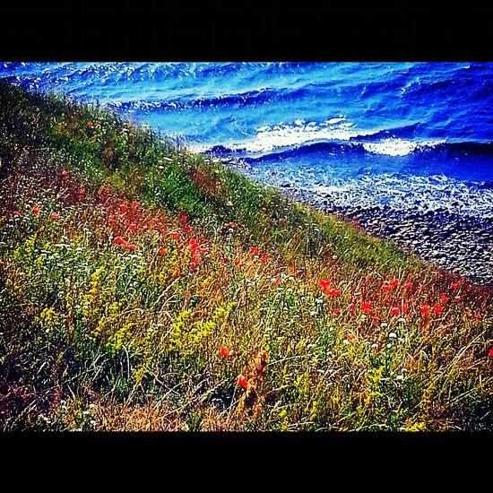 Flowers Vallmo Sea EyeEmBestPics The Great Outdoors - 2016 EyeEm Awards