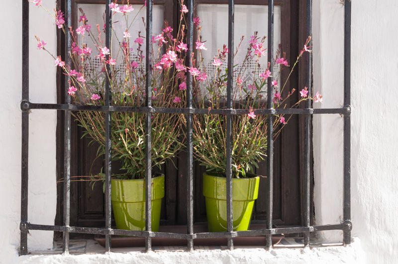 Flowering potted plants on window sill