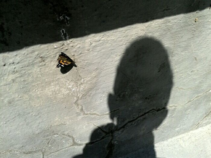 butterfly and i Simplicity The Wall Shadow Butterfly No Edit/no Filter Look! Pattern, Texture, Shape And Form Taking Corners