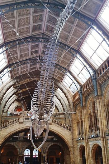 Built Structure Tourism Architecture History People Day Indoors  Ceiling Travel Leisure Activity London Natural History Museum