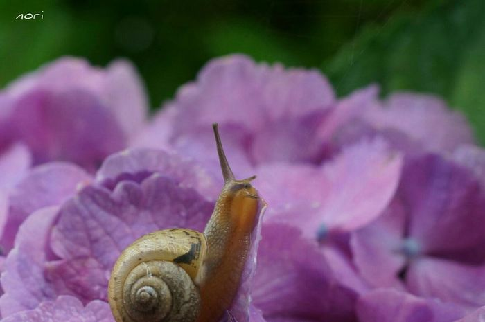 おはようございます❗今週も粘り強く頑張りますo(^o^)o あじさい Hydrangea EyeEm Nature Lover The Purist (no Edit, No Filter) 昨日と 同じ空の下 マクロ 紫陽花2015Photo Kagoshima