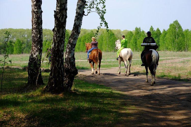 Horses on grassy field