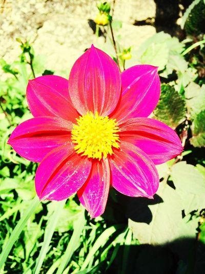 C'est dans les détails que l'on trouve la perfection, mais la perfection est loin d'être un détail. Flower
