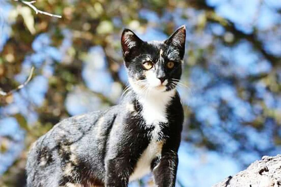 Calico Cat My Fur Baby Wildlife Animal Themes Focus On Foreground Outdoors Domestic Animals