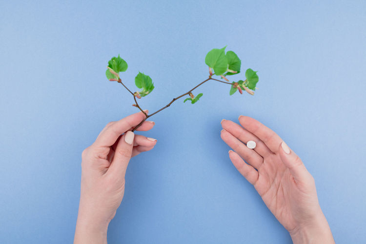 Cropped hand of woman holding plant against blue background