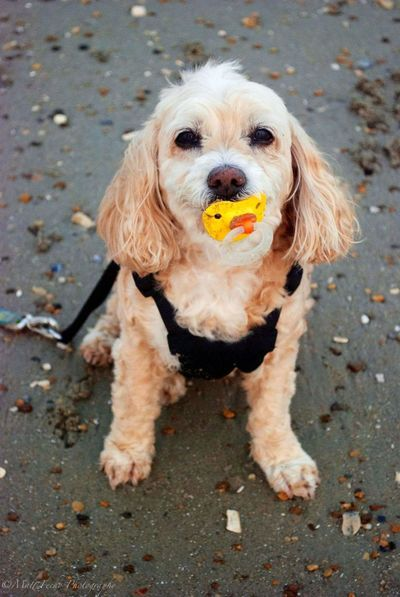 Dog Pets Animal Portrait Looking At Camera Domestic Animals One Animal Sand Sitting Animal Themes Pet Clothing Outdoors Mammal No People Day Pet Portraits
