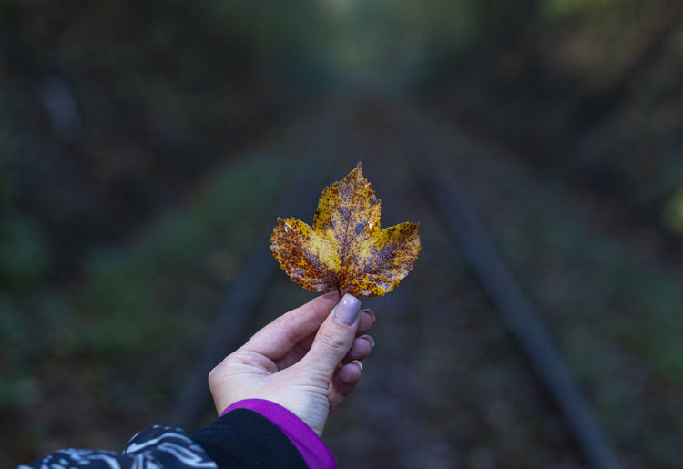 Close-up of hand holding maple leaf against rail road in forest