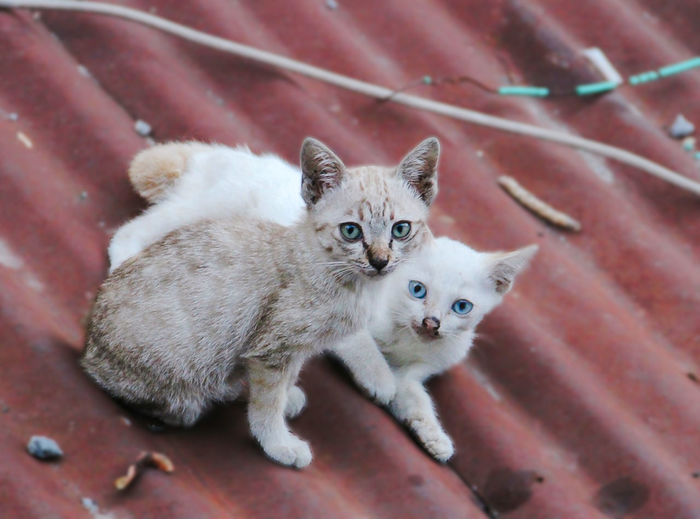 Portrait Of Kittens Sitting On Roof