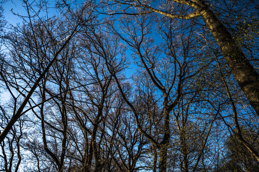 Bare Tree Beauty In Nature Blue Blue Sky Branch Branches Branches And Sky Day GERMANY🇩🇪DEUTSCHERLAND@ Growth Hessen Low Angle View Nature No People Outdoors Sky Tranquility Tree Wiesbaden, Germany