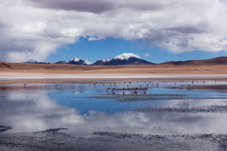 Scenic view of lake against cloudy sky with flamingos