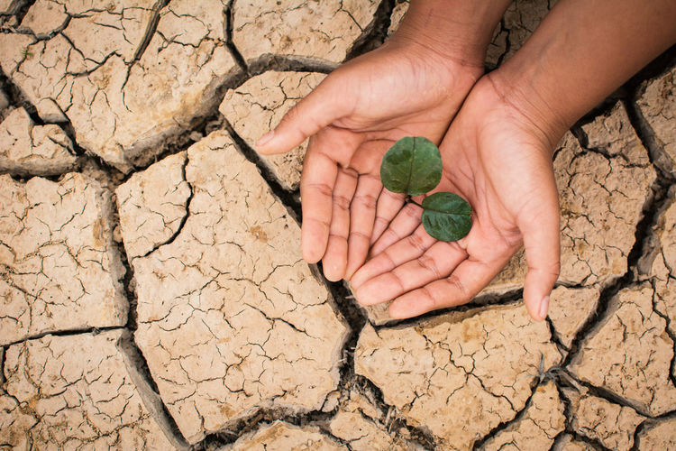 Cropped hands of person holding leaf over cracked field