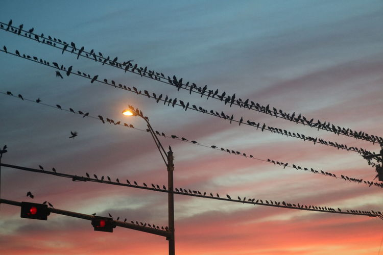 Beauty In Nature Bird Cloud - Sky Day Dusk Illuminated Low Angle View Nature No People Outdoors Scenics Sky Sun Sunset Birds Of EyeEm  Birds_collection Birds On A Wire Birds On Cable