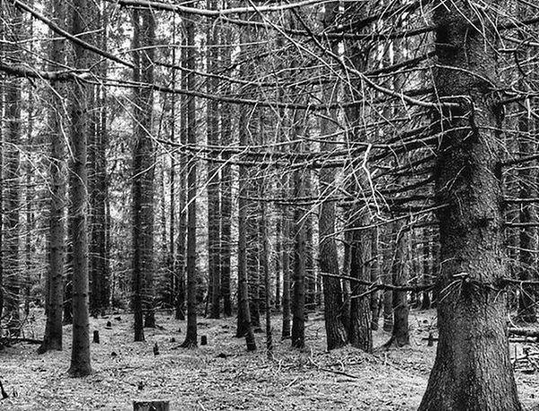 Match_bw Bw_lover Dark_nature Best_bnw_archive Bnw_captures Nature Naturelovers Insta_bw Pocket_bnw Srs_bnw Rsa_bnw Like4like Likeforlike Ayad_bnw Wood Darkness Darkwood Night Photoworld_star_bnw Bw_crew